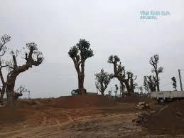 Bán đất nền cạnh khu công nghệ cao Hòa Lạc, ĐHQG,ĐHFPT,Viettel Hòa Lạc giá chỉ 10tr/m2